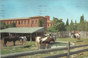 La tenuta dei Frati Trappisti a Frattocchie, da una cartolina del 1968